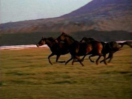 4 horses running wild